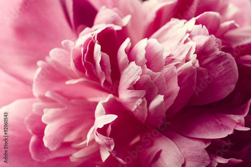 Stampa su Tela Peony flower