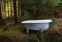 Bath Tub In The Forest