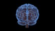 Brain 1001: A human brain rotates (Loop - with Matte).