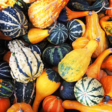 Gourds Of Different Shapes And...