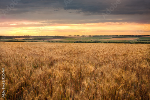 Foto auf Gartenposter Landschappen golden field of ripe wheat in the last rays of the sun