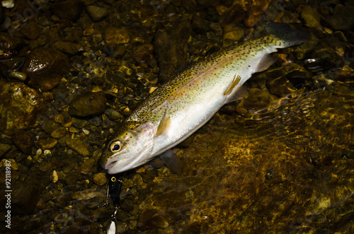Fotobehang The rainbow trout