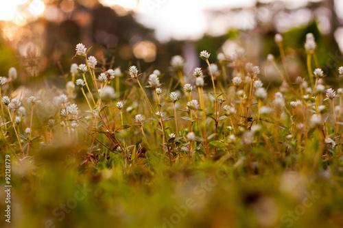 Fototapeta łąka laka-przy-dobrej-pogodzie