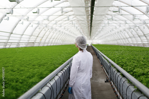 Fototapeta Junior agricultural scientists researching plants and diseases in a greenhouse w