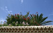 Tropical Plants Against Blue S...