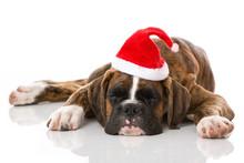 Schlafender Welpe Mit Weihnachtsmütze