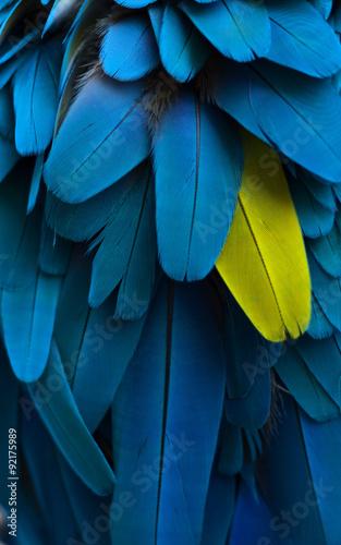 szczególne pióra papugi