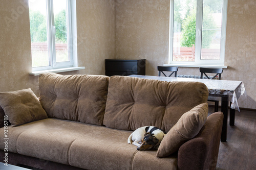 Fényképezés  dog sleeps on couch in the living room of a country house