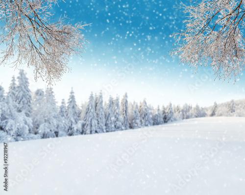 Fototapeta Winter landscape with tree branches obraz na płótnie