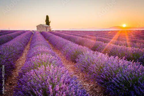 Papiers peints Lavande Valensole, Provence, France. Lavender field full of purple flowers
