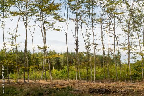 Obraz aleja drzew - fototapety do salonu