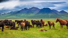 Herd Of Horses In The Mountain...