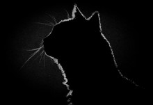 Profile Cat In The Dark