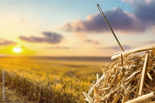 Fototapeta Needle in a Haystack.