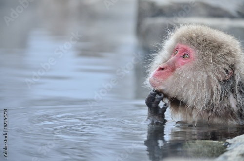 Foto op Plexiglas Aap 温泉に入るニホンザル