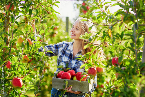 Fotografia Young woman picking apples in garden