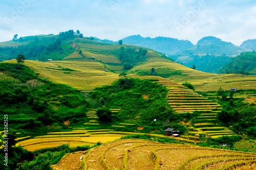 Foto op Aluminium Beijing Rice fields on terraced of Mu Cang Chai, YenBai, Vietnam. Rice fields prepare the harvest at Northwest Vietnam.
