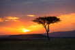 canvas print picture - Sunset in the Serengeti National Park, Tanzania, Africa