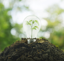 Light Bulb With Small Plant Inside On Pile Of Soil Over Green En