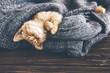 canvas print picture - Gigner kitten sleeping
