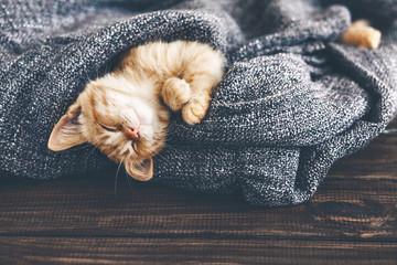 Fototapeta na wymiar Gigner kitten sleeping