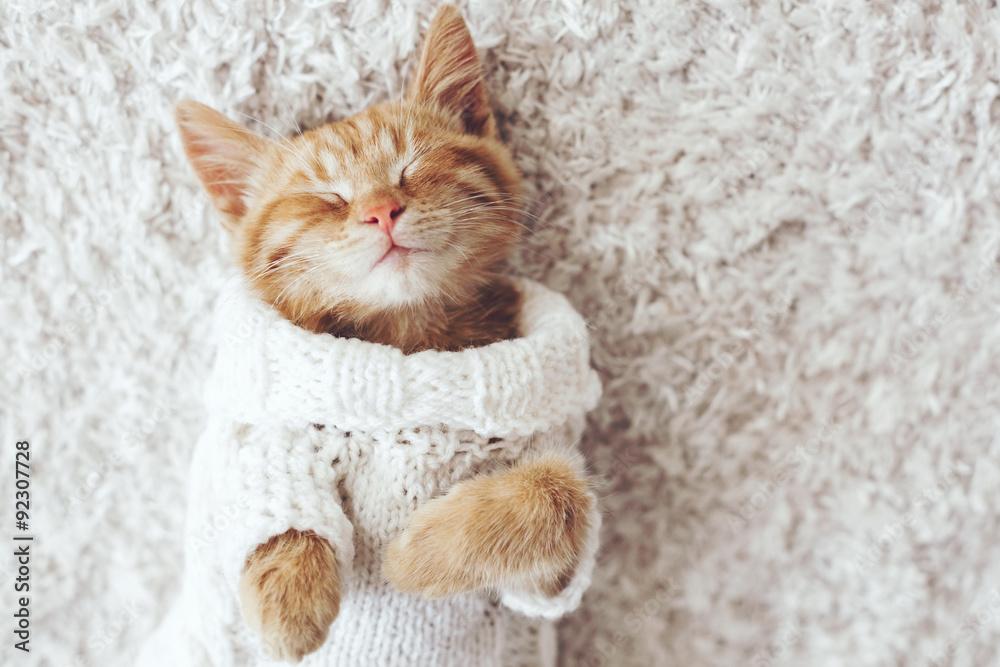 Fototapety, obrazy: Gigner kitten