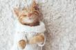 canvas print picture - Gigner kitten