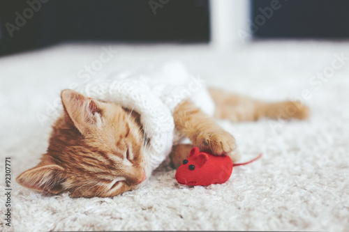 Gigner kitten Fototapeta