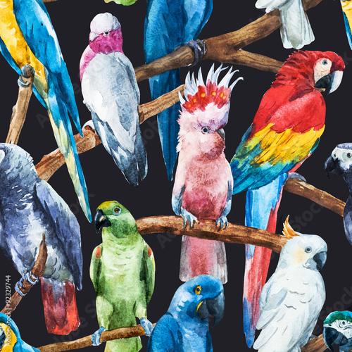 wzor-papuga-akwarela