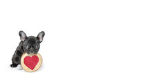French Bulldog Puppy Wishes Yo...