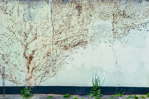 Fotografie, Obraz  Remnants of ivy branches on a faded concrete wall