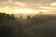 Landscape view of rainforest in mist at morning on mountain, Doi
