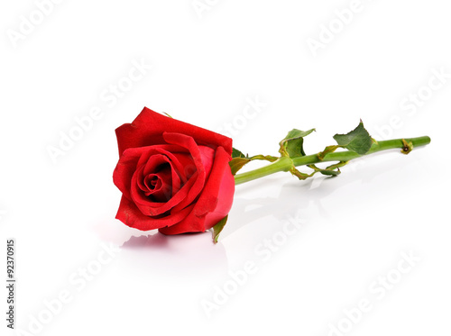 Photo  Red rose on white background