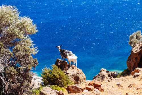 Photo  Funny big and little goat standing on ocean coastline cliff
