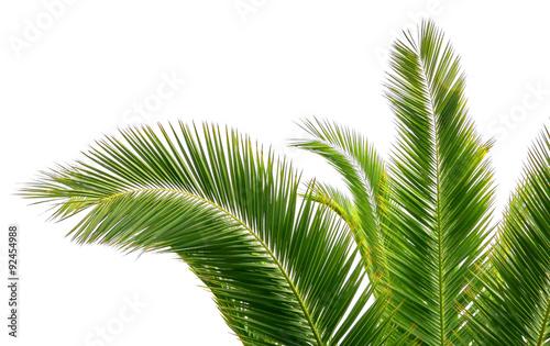Photo sur Aluminium Palmier Feuilles de palmier