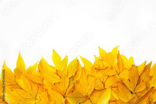 Photo Золотые листья
