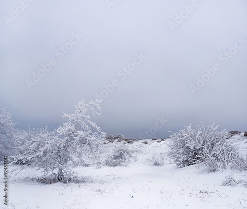 Tuinposter Wintersporten Amazing winter landscape with snow covered trees