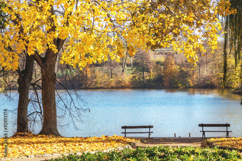Fotobehang Zwavel geel two benches on shore of pond in autumn park