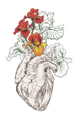 Fototapeta drawing Human heart with flowers