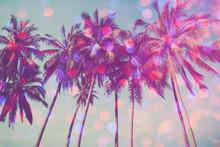 Palm Trees On Tropical Beach W...