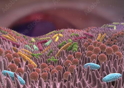 Photographie Flore intestinale
