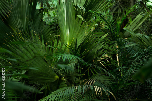 Fotobehang Natuur Palm trees in the botanocal garden in Poland, Krakow.