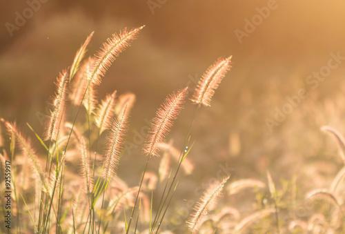 Fototapeta łąka trawy-na-lace-rozswietlone-sloncem