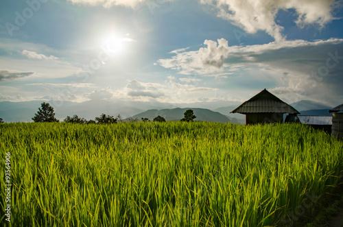 Foto auf Gartenposter Reisfelder Rice field, Rural mountain view, Beautiful landscape