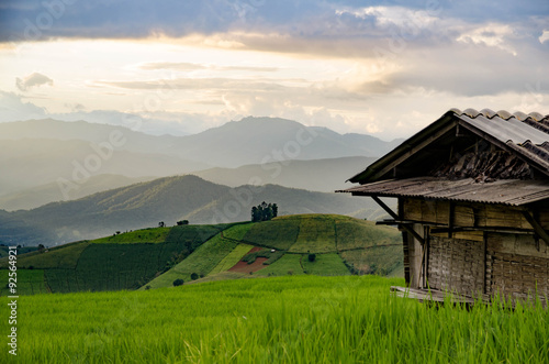 Poster Donkergrijs Rice field, Rural mountain view, Beautiful landscape