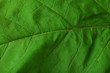 Fresh green leaf, close up