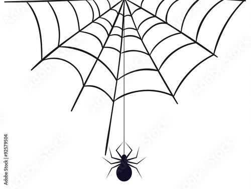 spinnennetz spinnenweben spinne spider  kaufen sie diese