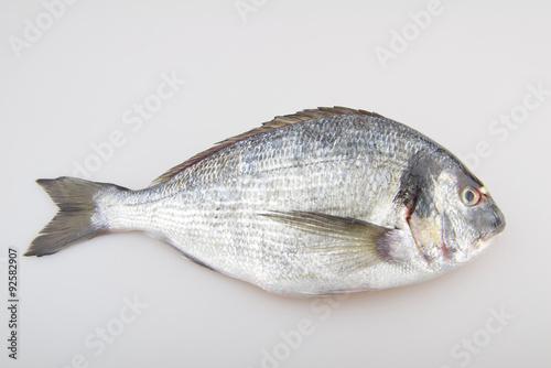 Poster Fish Seabream raw fish