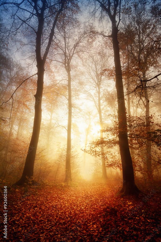 Fototapety, obrazy: Faszinierendes Licht bei Nebel im Wald