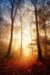 FototapetaFaszinierendes Licht bei Nebel im Wald